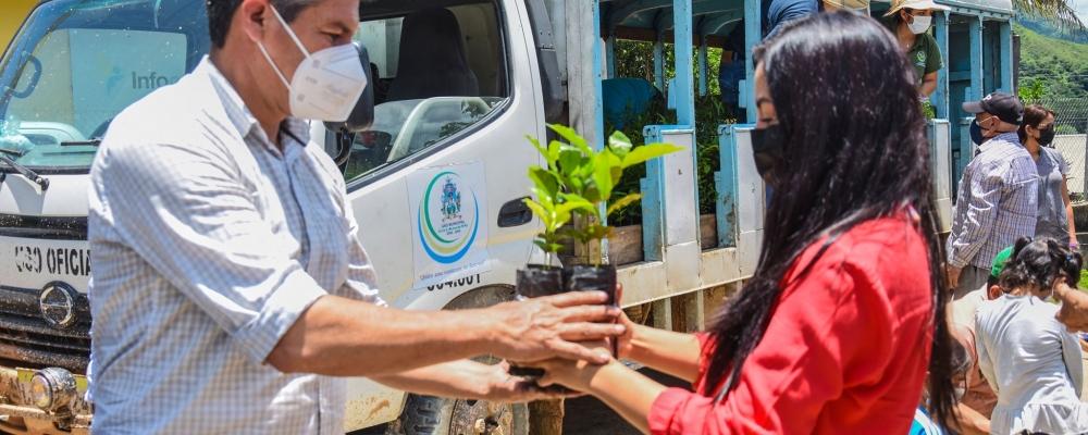 ENTREGA DE 3780 PLANTAS DE CAFÉ Y 750 FORESTALES, COMO PARTE DEL PROYECTO DE REACTIVACIÓN DEL AGRO.